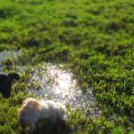 Hunde beim umherschnüffeln