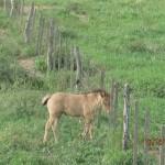 Pferd auf der Koppel