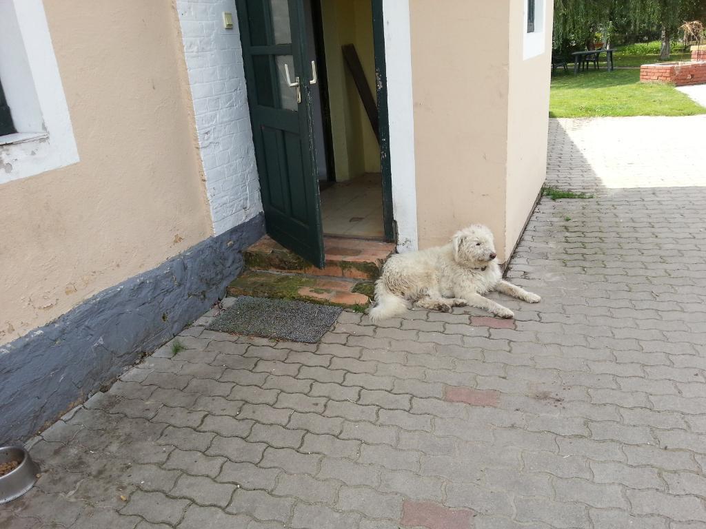 ein Handzahmer Hund gehört dazu